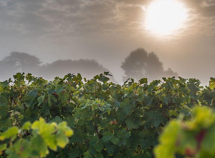 Cépage exclusifs pour des vins d'exception