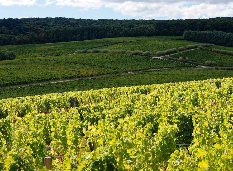 slider-sancerre-thauvenay-2